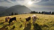 steiermark-tourismus-ikarus